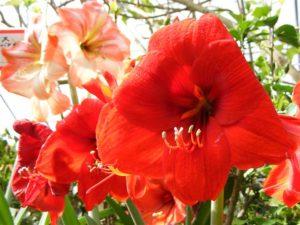 花やしき(4)
