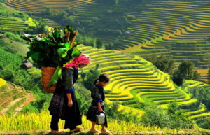 (へ) ベトナム